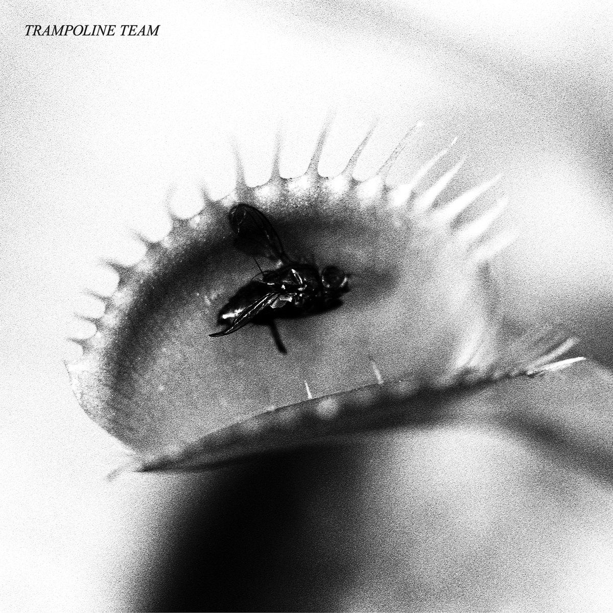 Trampoline Team | Trampoline Team | 3hive.com